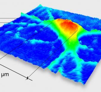 Immagine 3D di neurone di topo, catturata grazie alla microscopia olografica digitale (DHM®)