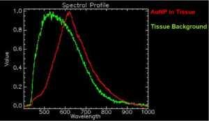 Risposta spettrale di nanoparticelle d'oro e tessuto