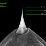 Conoscere con accuratezza la forma e le dimensioni della punta AFM di Adama Innovations