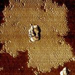 NANO-DONUTS, Tapping mode, 3 µm